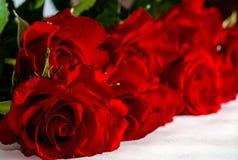 Un mazzo delle rose rosse su un fondo bianco Fotografie Stock