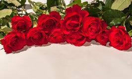 Un mazzo delle rose rosse su un fondo bianco Immagine Stock Libera da Diritti