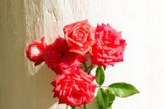 Un mazzo delle rose sarà un regalo per il giorno delle donne fotografia stock