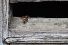 Un mazzo delle viole appassite Fotografia Stock