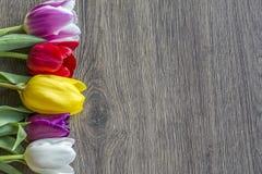 Un mazzo di cinque tulipani colorati delicati con un posto per l'iscrizione desidera Fotografie Stock Libere da Diritti