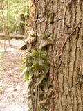 Un mazzo di ciondolare le mezze foglie verde scuro morte dal lato di Fotografia Stock