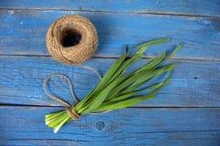 Un mazzo di cipolle verdi legate con corda e una matassa dei fili l fotografia stock