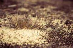 Un mazzo di erba asciutta Fotografie Stock