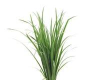 Un mazzo di erba verde Fotografia Stock