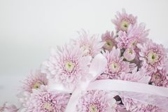 Un mazzo di fiori rosa del crisantemo con l'arco del nastro Fotografia Stock