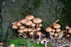 Un mazzo di funghi Fotografia Stock