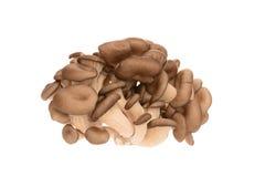 Un mazzo di funghi di ostrica Fotografie Stock Libere da Diritti