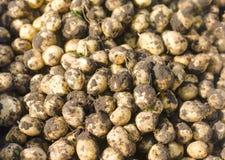 Un mazzo di giovani patate gialle fresche sul primo piano del campo, agricoltura, coltivando, lavoro stagionale, verdure, in cond Fotografia Stock
