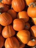 Un mazzo di grandi zucche arancio Struttura Immagini Stock