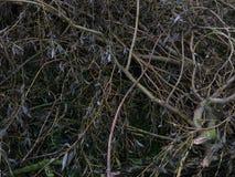 Un mazzo di rami Fotografia Stock
