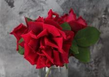 Un mazzo di rose rosse fotografia stock libera da diritti