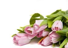 Tulipes rosa Fotografia Stock