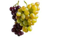 Un mazzo di uva gialla e blu su fondo bianco immagini stock libere da diritti