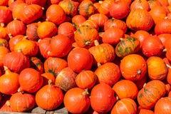 Un mazzo di zucche gialle arancio fotografia stock