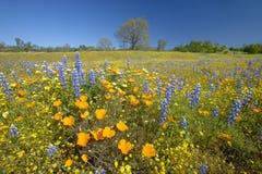 Un mazzo variopinto dei fiori della sorgente Fotografie Stock