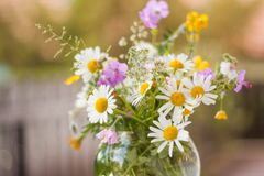 Un mazzo variopinto dei wildflowers di recente selezionati Immagini Stock