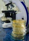 Un microscope dans la perspective des boîtes de Pétri photo libre de droits