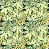 Un modèle des palmettes variées colorées sur vert-foncé Photographie stock