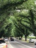Un modello frondoso lungo degli alberi immagini stock libere da diritti