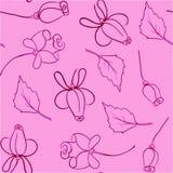 Un modelo de rosas Imagen de archivo libre de regalías