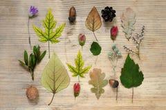 Un modelo del otoño encuentra - las hojas de arce amarillas, roble, flores salvajes secas, bellotas Fondo de madera Composición d foto de archivo