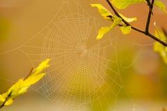 Un modelo del Web de araña para el spiderweb asustadizo de Halloween Foto de archivo libre de regalías