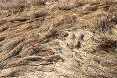 Un modelo extraño pintó una nieve de la hierba amarilla machacada s del ` del año pasado Foto de archivo libre de regalías