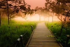 Un modo della passeggiata in Siam Tulip fotografia stock libera da diritti