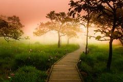 Un modo della passeggiata in Siam Tulip immagine stock libera da diritti