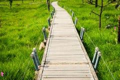 Un modo della passeggiata in Siam Tulip Field Immagini Stock Libere da Diritti
