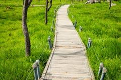 Un modo della passeggiata in Siam Tulip Field Immagini Stock