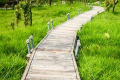 Un modo della passeggiata in Siam Tulip Field Fotografia Stock Libera da Diritti