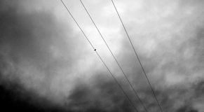 Un moineau se tient sur des fils de l'électricité avec un ciel peu amical foncé ci-dessus Image libre de droits