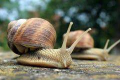 Un mollusque Images libres de droits