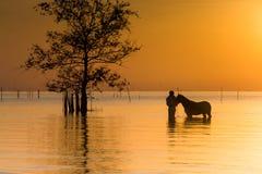 Un moment tendre de cheval photo stock