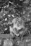 Un mono imagenes de archivo