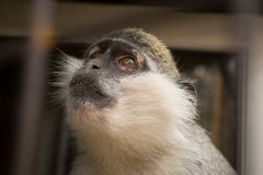 Un mono con el cual sueña Imagen de archivo libre de regalías