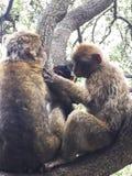 un mono con su bebé en la selva fotos de archivo libres de regalías