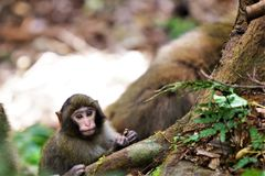 Un mono del bebé Fotografía de archivo