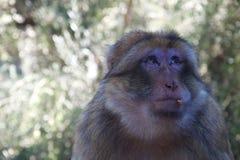 Un mono dramático con la comida en su cara fotografía de archivo libre de regalías