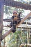 Un mono en la jaula foto de archivo