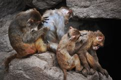 Un mono en Qingdao, China fotos de archivo