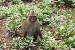 Un mono en selva Foto de archivo