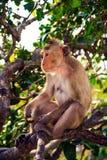 Un mono está comiendo habas imágenes de archivo libres de regalías