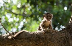 Un mono infantil solo y asustado Imagen de archivo