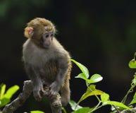 Un mono lindo del bebé se está sentando en la rama Fotos de archivo libres de regalías