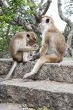 Un mono que limpia otro imagenes de archivo