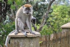 Un mono que se sienta en una columna imagen de archivo