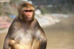 Un mono que tiene pensamientos serios Imagenes de archivo